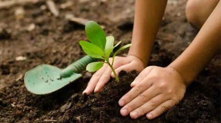 Beneficios de enseñar educación ambiental a los niños desde primaria