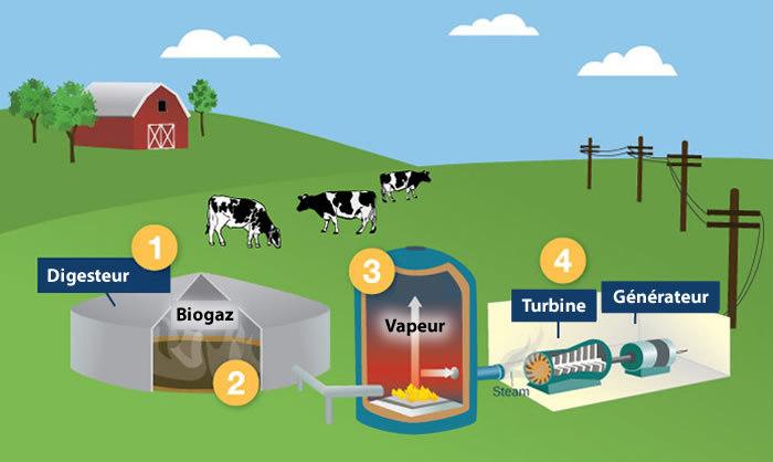 Biocombustibles gaseosos: Biogás