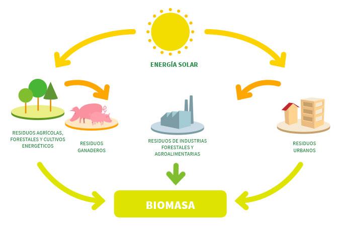 Tipos de biomasa, forestal, agrícola y de residuos urbanos.