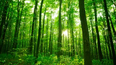 Irlanda plantará 440 millones de árboles
